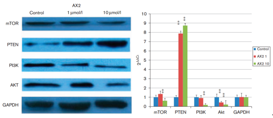 Apoptosis of human prostate cancer cells induced by marine actinomycin X2 through the mTOR pathway compounded by MiRNA144