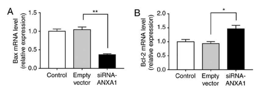 Silencing of Annexin A1 suppressed the apoptosis and inflammatory response of preeclampsia rat trophoblasts